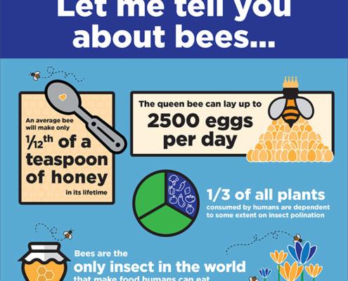 Honey bee infographic - general bee info